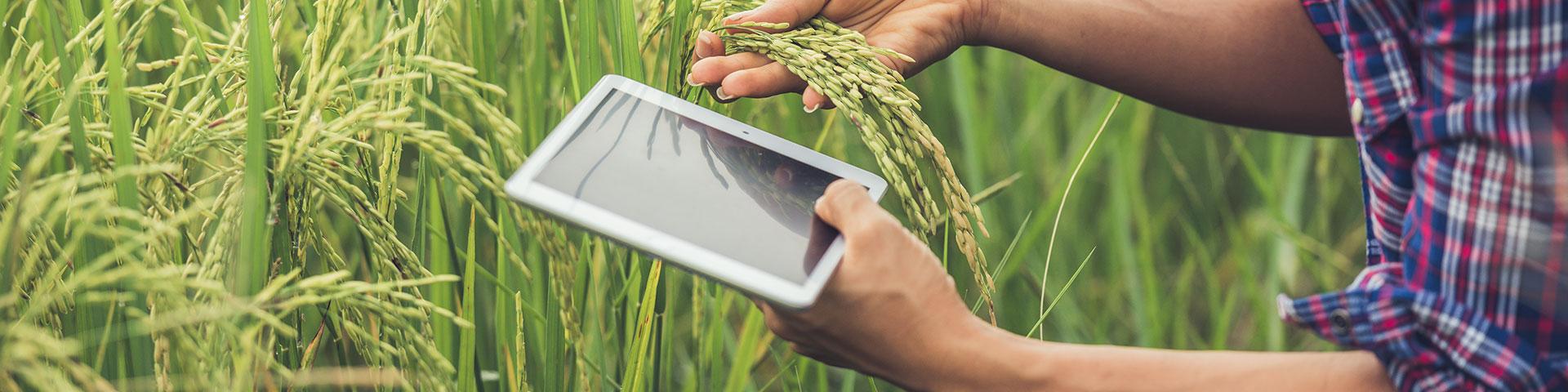 post gestion de cultivos